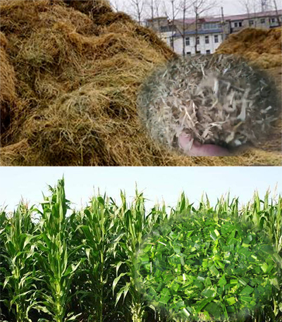 The Silage and Yellow Storage Materials